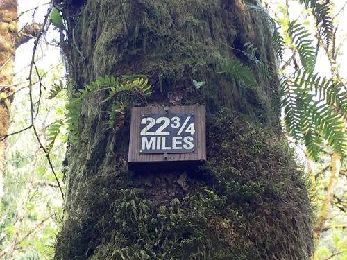 Medium forest park 2