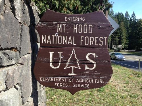 Medium mt hood ntl forest shield